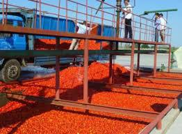 tinned tomato paste at wholesale price