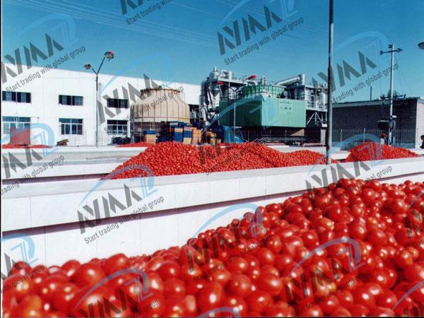 factories producing tomato paste