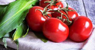 sale aseptic tomato paste
